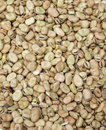 Fava beans vicia faba group of Stock Photo