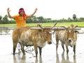 Fazendeiro que trabalha em seu campo de almofada Fotografia de Stock