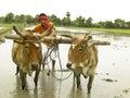 Fazendeiro que trabalha em seu campo de almofada Fotografia de Stock Royalty Free