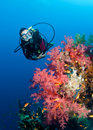 Feamle scuba diver and colourful coral reef Royalty Free Stock Photo