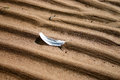 Feather on beach Royalty Free Stock Photo