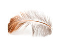 Feather of a bird on a white background Royalty Free Stock Photography