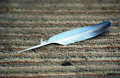 Feather on a carpet picture of Stock Image
