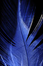 Feather closeup (blue) Royalty Free Stock Photo