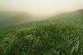 Feather grass in foggy morning at the hills summer landscape Royalty Free Stock Images