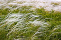The feather grass in the steppe Royalty Free Stock Images