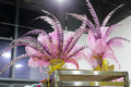 Feather headdress pink of circus Stock Image