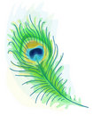 Feather of a peacock. Watercolor style. Royalty Free Stock Image
