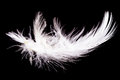 Feather pen white quill isolated on a black background Royalty Free Stock Images
