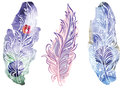 Feather on raster watercolor background set ot Stock Photos