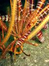 Feather Star Collection Royalty Free Stock Photos