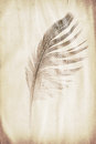 Feather watermark Royalty Free Stock Photo
