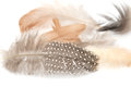 Feather on a white background Royalty Free Stock Photos