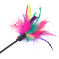 Feathered pole cat toy on white background a multicolored a Royalty Free Stock Photos