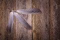 Feathers over old wood background Royalty Free Stock Photography