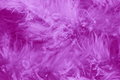 Feathers purple background romantic stock images card for valentines or mothers day or easter with dark pink plumes Royalty Free Stock Photography