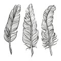 Feathers set hand drawn vector llustration realistic sketch Stock Photo
