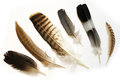 Feathers on white background Royalty Free Stock Photography