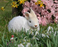 Feature photo easter Stock Photos