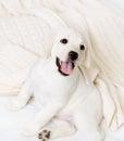 Feche acima do filhote de cachorro feliz que senta-se no sofá Foto de Stock