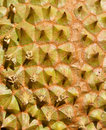 Federation of Thai durian texture background Royalty Free Stock Photo