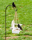 Feeding Backyard Birds Stock Photography