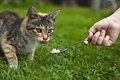 Feeding cat Royalty Free Stock Images