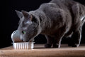 Feeding the Cat Royalty Free Stock Photo
