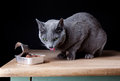 Feeding the Cat Royalty Free Stock Photography