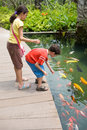 Feeding colorful Koi carps in tropical pond. Royalty Free Stock Photography