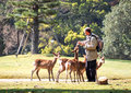 Feeding deer in nara japan apr tourist feed at park on april the have been regarded as heavenly animals Royalty Free Stock Photo
