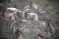 Feeding frenzy of fish mostly catfish Royalty Free Stock Photography