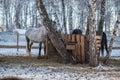 Feeding horses Royalty Free Stock Photo