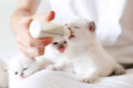 Feeding little white cat Royalty Free Stock Photo