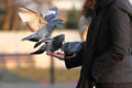 Feeding pigeons woman from hand Royalty Free Stock Photography