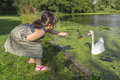 Feeding swans and ducks one of the favorite summer activity of little asian girl which is to give bread to at the border a calm Stock Image