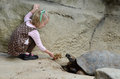 Feeding a tortoise Stock Images