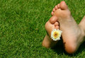 Feet and the flower Stock Images