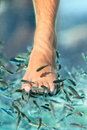 Feet pedicure fish spa Royalty Free Stock Image