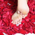Feet and rose-petals Royalty Free Stock Photos