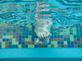 Feet under water Royalty Free Stock Photography
