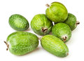 Feijoa group Stock Images