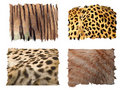 Feline animals fur patterns Royalty Free Stock Photos