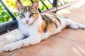 Feline Cat Kitty Cute Kitten Feline