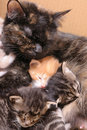 Feline family Royalty Free Stock Image