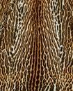 Feline fur background Royalty Free Stock Photo