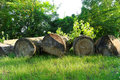 Felled boles in a forest at the sunny summer day Royalty Free Stock Photography
