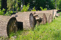Felled boles row of in a forest Stock Photography