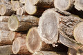 Felled logs close up of chopped wood stacked in a pile Royalty Free Stock Photo