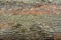Felled oak tree trunks closeup photography Stock Images